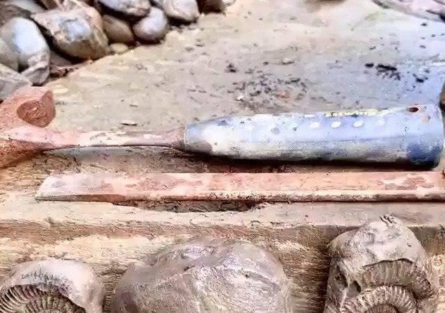 latest technology updates Fossil Found! . Follow @clipingram  Follow @clipingram  Follow @clipingram  . . … from techmirrors